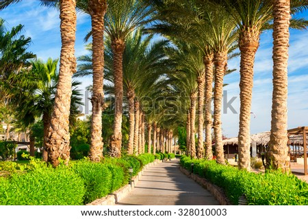 Beautiful alley road from green tropical palm tree. Summertime vibrant multicolored outdoors horizontal image. Egypt. Sharm-el-sheikh - stock photo
