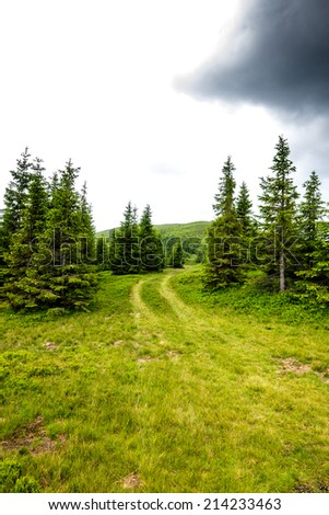 Beautiful alpine landscape with pines in Romania - stock photo