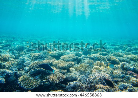 beautiful and diverse coral reef with fishes of the red sea in Egypt, shooting under water - stock photo