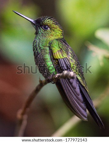Beautiful and exotic green bird on a branch - stock photo