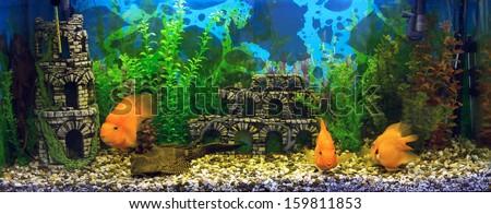 Beautiful aquarium with sea fish - stock photo