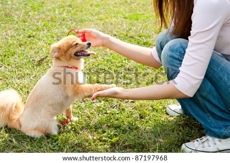 beautiful asian woman with dog in the park - stock photo