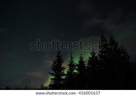 Beautiful aurora borealis in winter spruce tree forest - stock photo
