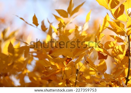 Beautiful autumn background - stock photo