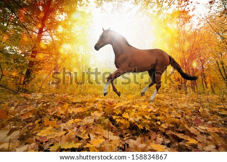 Beautiful autumn background - brown horse running in park, yellow, orange, red leaves, bright sunny fall day in park, picture for chinese year of horse 2014 - stock photo