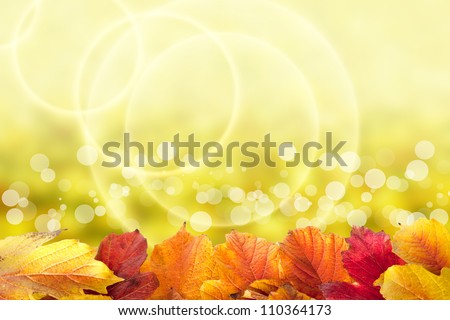 Beautiful autumn background with viburnum leaves - stock photo