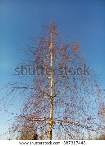 Beautiful autumn birch and blue sky/Beautiful autumn birch and blue sky/Beautiful autumn birch and blue sky - stock photo