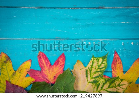 Beautiful autumn color leaves on blue painted wood background with copy space for text - stock photo