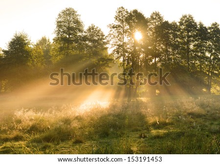 Beautiful autumn dawn on forest edge - stock photo
