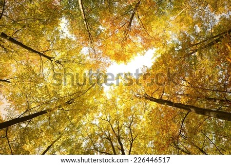 Beautiful autumn day in the forest - stock photo