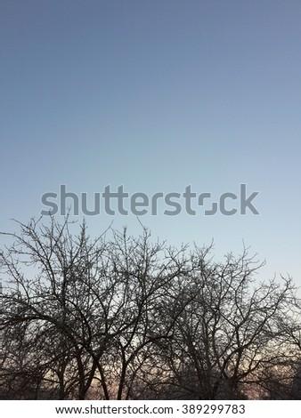 Beautiful autumn evening sky after sunset and bare trees/Beautiful autumn evening sky after sunset and bare trees/Beautiful autumn evening sky after sunset and bare trees - stock photo
