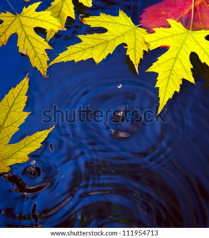 Beautiful autumn fallen leaves into the water in the autumn rain - stock photo