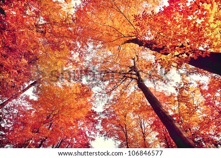 Beautiful autumn forest - stock photo