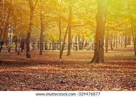 Beautiful autumn forest  - stock photo