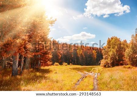 Beautiful autumn forest at sunny day. Fantastic autumn landscape. Fall scene - stock photo
