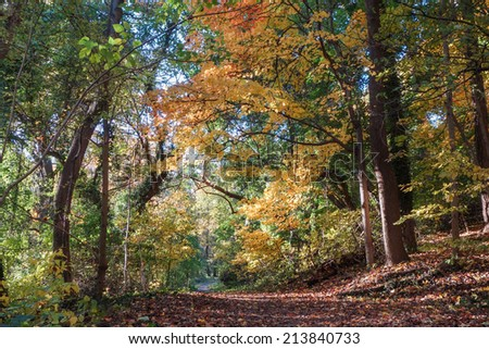 Beautiful Autumn forest in Rock Creek Park, Washington DC - United States  - stock photo