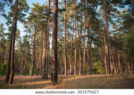 Beautiful autumn forest in summer - stock photo