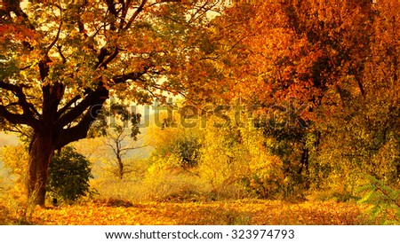 Beautiful autumn forest landscape. Header for website - stock photo