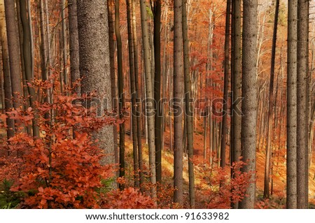 Beautiful autumn forest scenery during the daytime. - stock photo