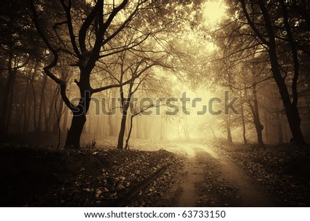 beautiful autumn in a golden forest with fog - stock photo