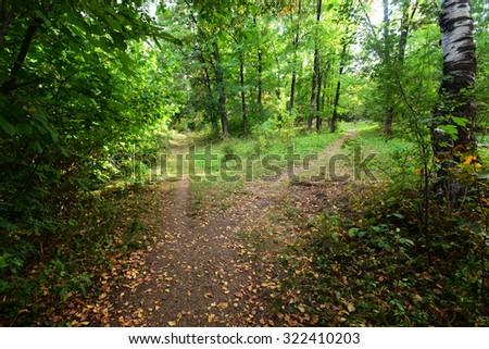 Beautiful autumn landscape - stock photo