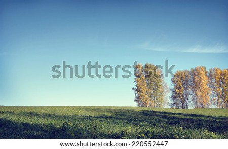Beautiful autumn landscape in a sunny day with birch trees and meadow - stock photo
