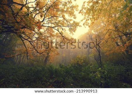 Beautiful autumn landscape with trees, leaves, lush foliage and fog. - stock photo