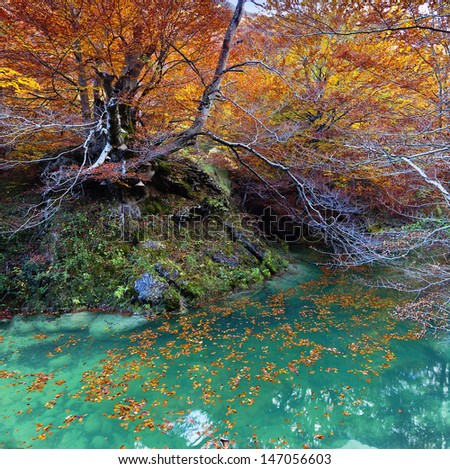 Beautiful autumn landscape with turquoise water river in a yellow beech forest.Northern Spain. - stock photo
