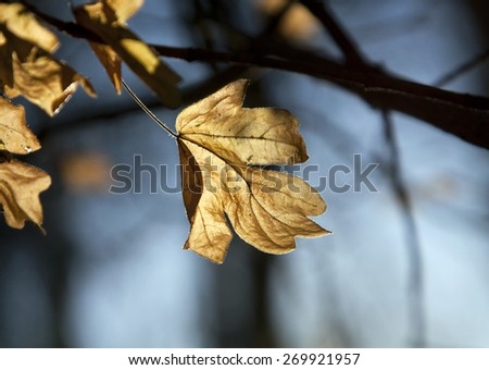 Beautiful Autumn leaf closeup in the forest - stock photo