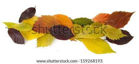 Beautiful autumn leaves isolated on white - stock photo