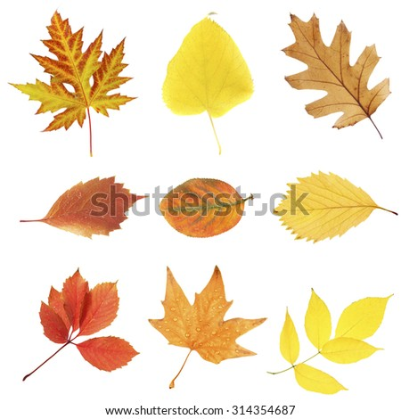 Beautiful autumn leaves, isolated on white - stock photo