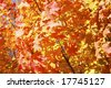 Beautiful autumn leaves on a bright autumn day - stock photo