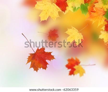 Beautiful autumn maple leaves. Autumn concept. - stock photo