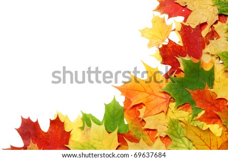 Beautiful autumn maple leaves isolated on white background - stock photo