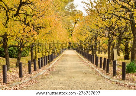 Beautiful Autumn Pathway In The Park - stock photo