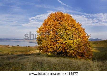 beautiful autumn single  tree near to Batak dam lake - stock photo