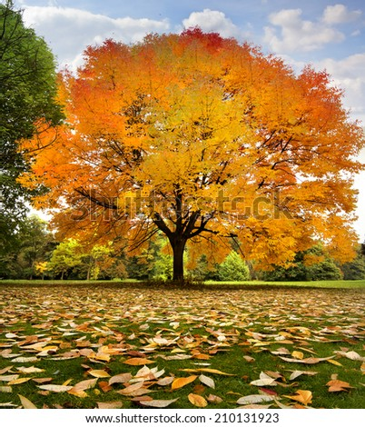 Beautiful autumn trees. Autumn landscape. - stock photo