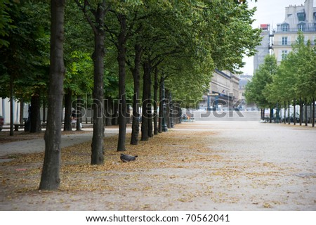 beautiful autumn trees in city park - stock photo