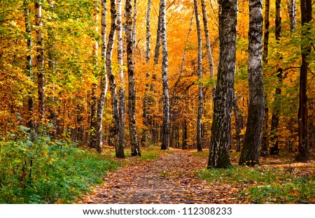 Beautiful autumnal park with colorful leaves covering the ground - stock photo