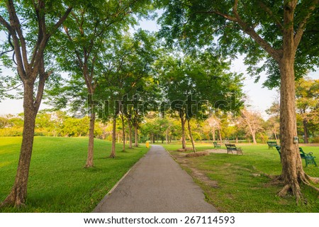 Beautiful avenue in to the park, path way - stock photo