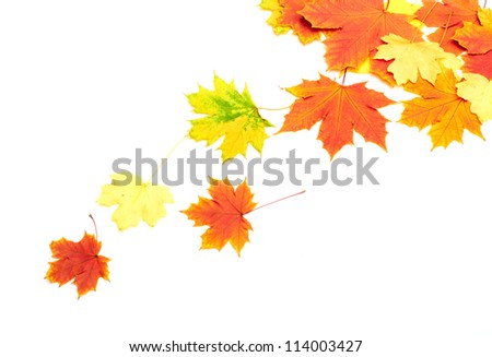 Beautiful background of autumn leaves - stock photo