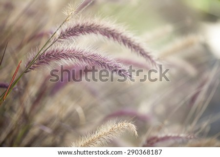 Beautiful background spikes with backlight - stock photo