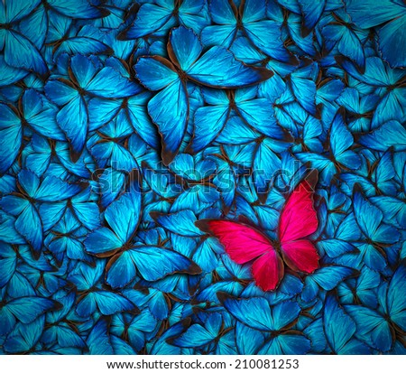 beautiful background with lot of different butterflys - stock photo
