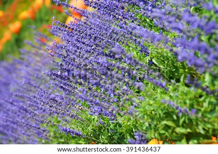 beautiful background with purple flowers - stock photo
