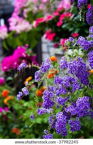 Beautiful backyard garden. Japan, Kobe - stock photo