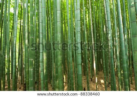 Beautiful bamboo forest in near Arashiyama, Japan - stock photo
