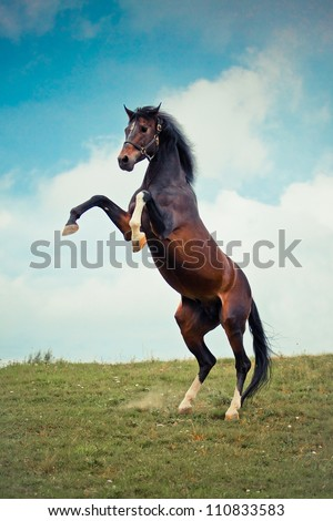 Beautiful bay stallion standing in the meadow - stock photo