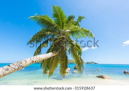 Beautiful beach Anse Boudin seen from under the coconut palm, Praslin island, Seychelles.  - stock photo