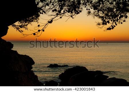 Beautiful beach at sunrise with trees - stock photo