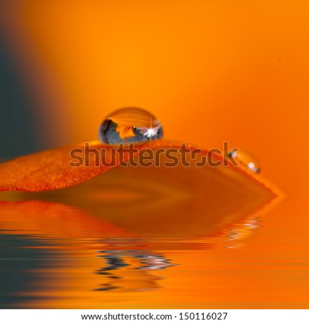 Beautiful beaded water drop resting on top of orange lily leaf with lily causing a misty orange affect in background - reflections (Macro) - stock photo